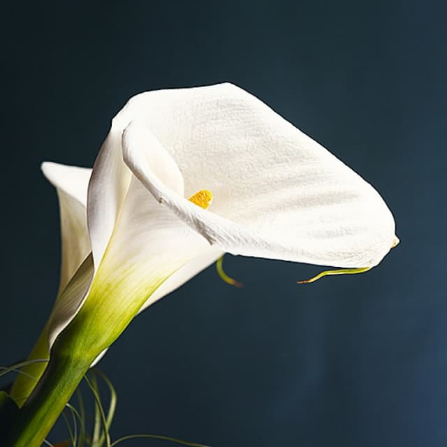 Букет свадьбу, цветы каллы цена воронеж