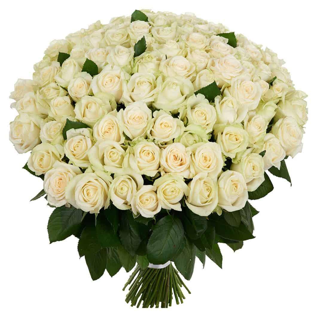 101 white roses - Kannike Epood